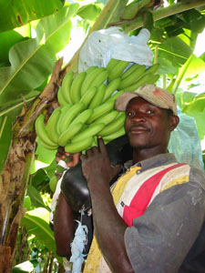 fairtrade_bananas